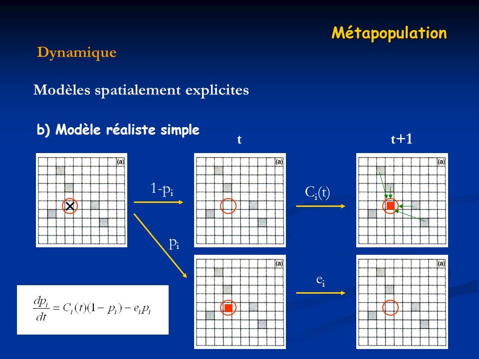 Dynamique Métapopulation Modèles spatialement explicites b) Modèle réaliste simple t 1-p i pipi eiei t+1 C i (t)
