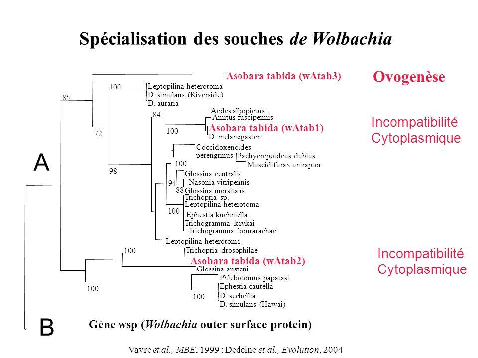 D. simulans (Hawai) D. sechellia Ephestia cautella Phlebotomus papatasi 100 Glossina austeni Asobara tabida (wAtab2) Trichopria drosophilae 100 Leptop