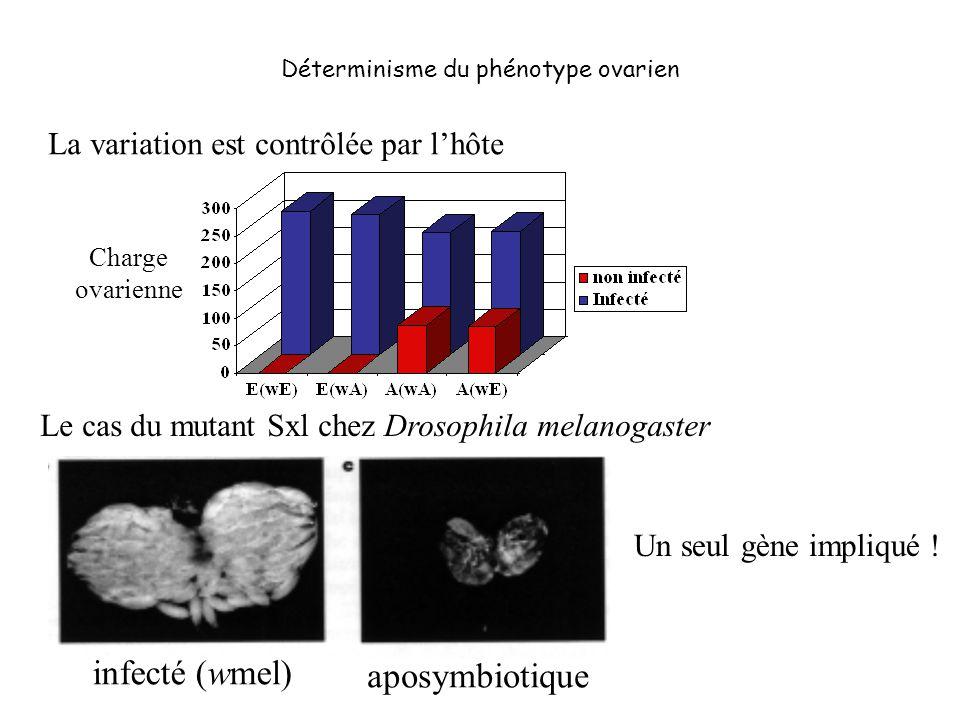 Déterminisme du phénotype ovarien La variation est contrôlée par lhôte infecté (wmel) aposymbiotique Le cas du mutant Sxl chez Drosophila melanogaster