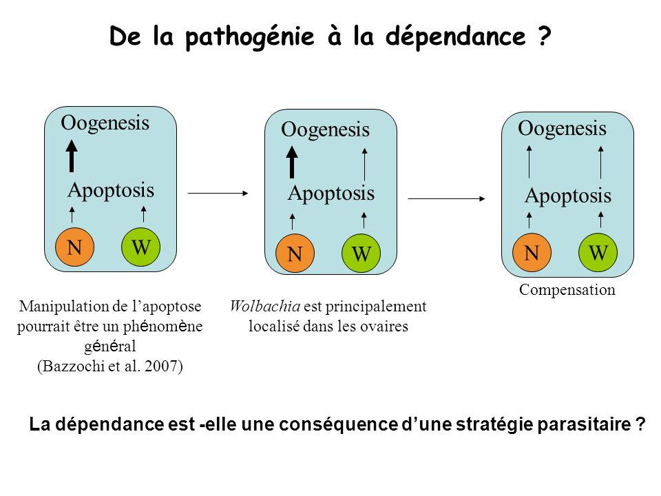 De la pathogénie à la dépendance ? Apoptosis W Oogenesis N Manipulation de lapoptose pourrait être un ph é nom è ne g é n é ral (Bazzochi et al. 2007)
