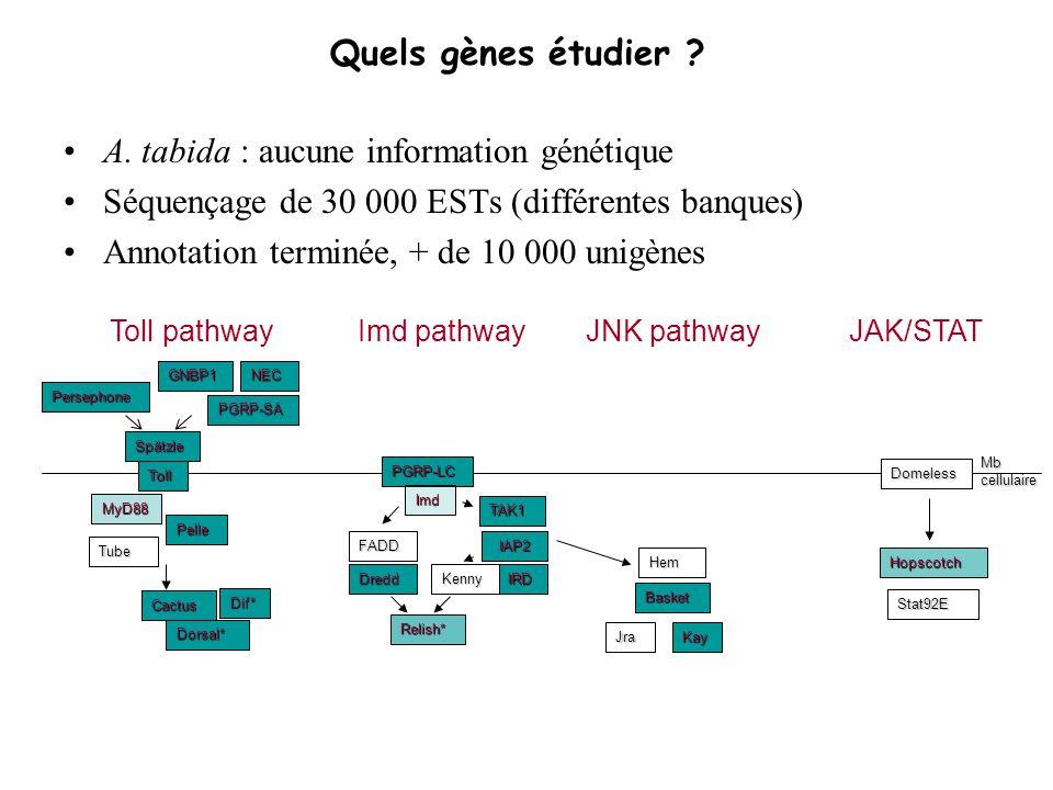 Quels gènes étudier ? A. tabida : aucune information génétique Séquençage de 30 000 ESTs (différentes banques) Annotation terminée, + de 10 000 unigèn