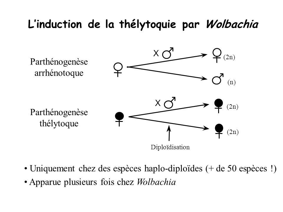 Linduction de la thélytoquie par Wolbachia (2n) (n) X Parthénogenèse arrhénotoque (2n) Diploïdisation X Parthénogenèse thélytoque Uniquement chez des