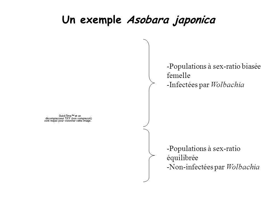 Un exemple Asobara japonica -Populations à sex-ratio biasée femelle -Infectées par Wolbachia -Populations à sex-ratio équilibrée -Non-infectées par Wo
