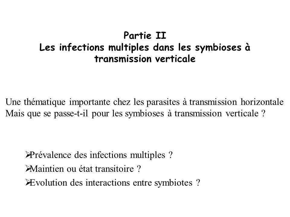 Partie II Les infections multiples dans les symbioses à transmission verticale Prévalence des infections multiples ? Maintien ou état transitoire ? Ev