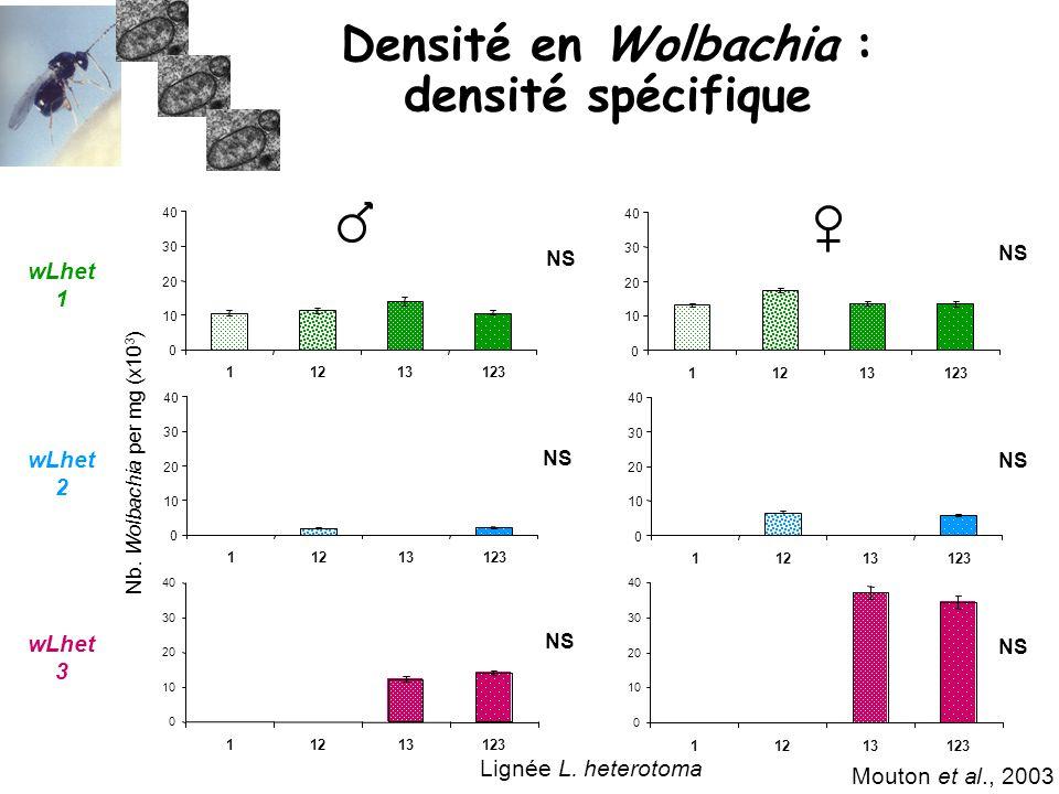 Densité en Wolbachia : densité spécifique Mouton et al., 2003 Nb. Wolbachia per mg (x10 3 ) NS 0 10 20 30 40 11213123 0 10 20 30 40 11213123 Lignée L.