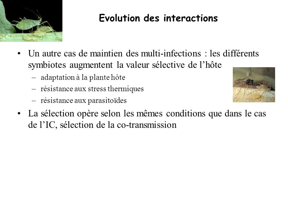 Evolution des interactions Un autre cas de maintien des multi-infections : les différents symbiotes augmentent la valeur sélective de lhôte –adaptatio