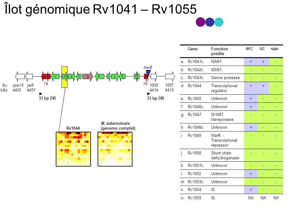 33 bp DR ppe15 4452 pe8 4451 1056 4414 1057 4413 IS leuX Rv MM GeneFonction prédite AFCGCsign aRv1041cISMt1++- bRv1042cISMt1--- cRv1043cSerine protease--- dRv1044Transcriptional regulator ++- eRv1045Unknown+-- fRv1046cUnknown+-- gRv1047IS1081 transposase --- hRv1048cUnknown+-- iRv1049MarR - Transcriptional repressor --- jRv1050Short chain dehydrogenase --- kRv1051cUnknown--- lRv1052Unknown+-- mRv1053cUnknown--- nRv1054IS+-- oRv1055ISNA Îlot génomique Rv1041 – Rv1055 aceghjkln Rv1044 M.