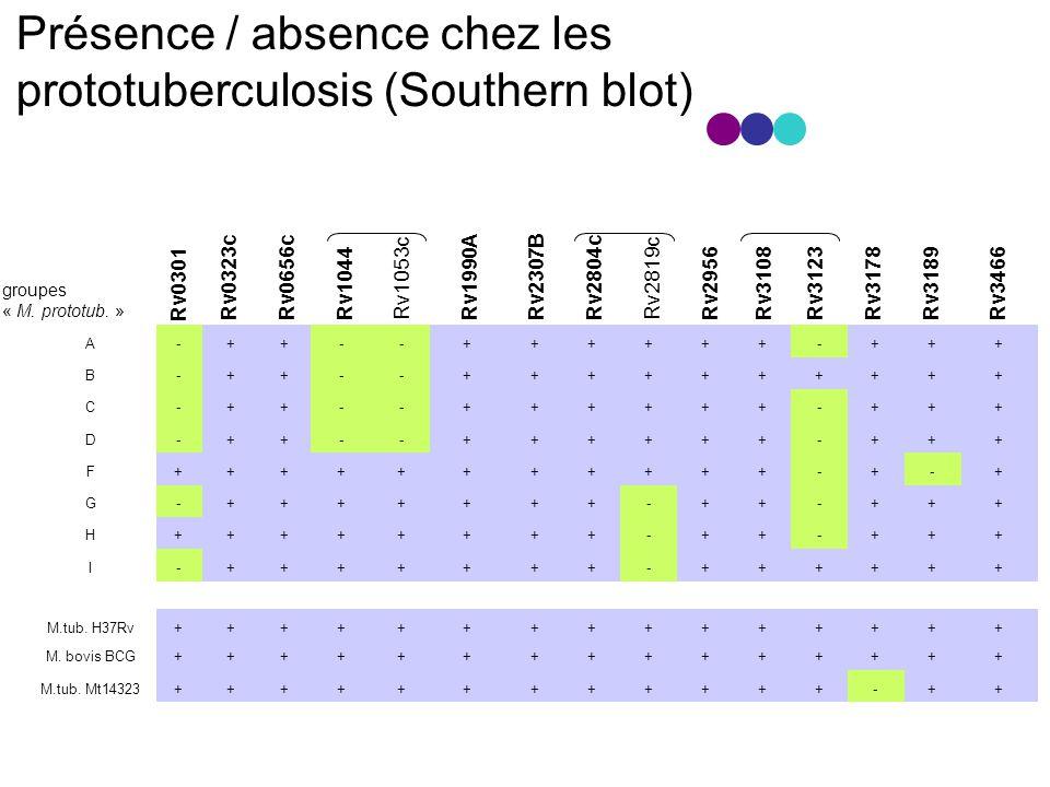 Présence / absence chez les prototuberculosis (Southern blot) M.tub.