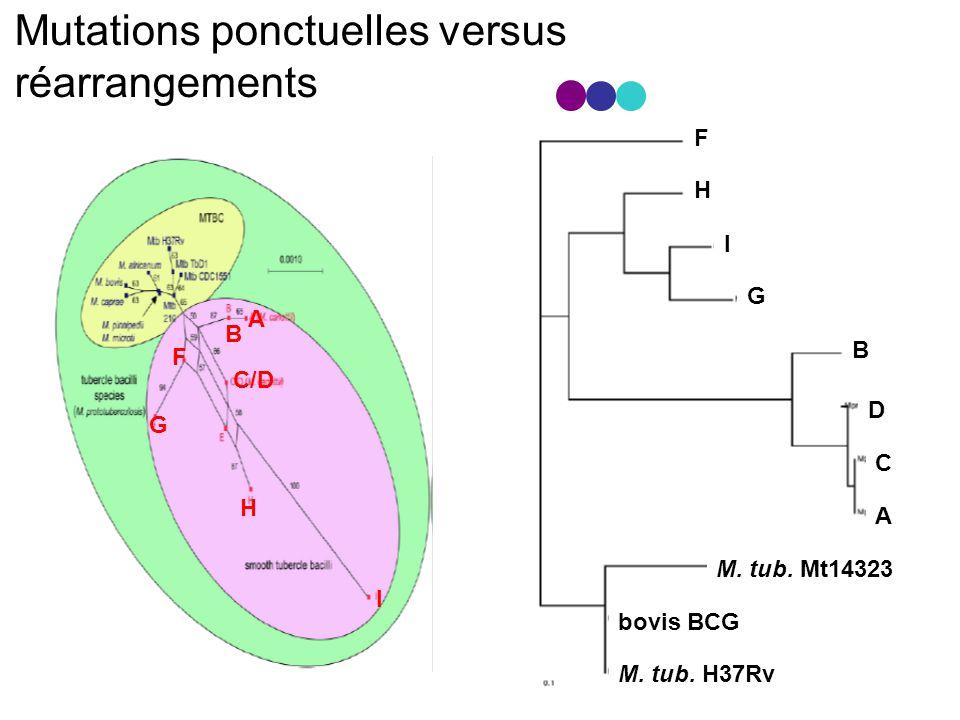 Mutations ponctuelles versus réarrangements F I G B D C A H bovis BCG M.