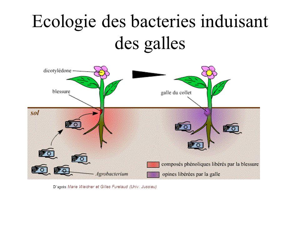 Ecologie des bacteries induisant des galles Daprès Marie Weidner et Gilles Furelaud (Univ. Jussieu)