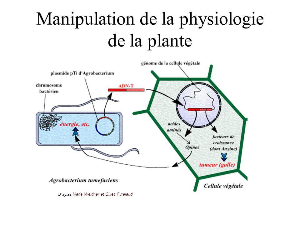 Manipulation de la physiologie de la plante Daprès Marie Weidner et Gilles Furelaud