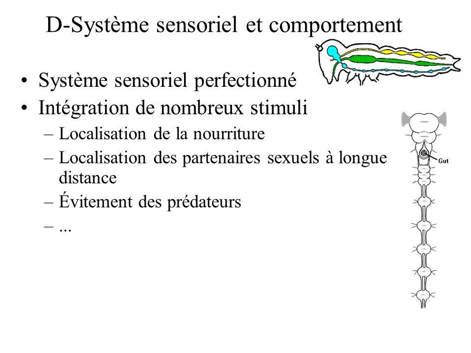 D-Système sensoriel et comportement Système sensoriel perfectionné Intégration de nombreux stimuli –Localisation de la nourriture –Localisation des pa