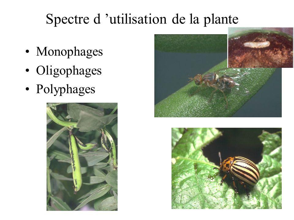 Spectre d utilisation de la plante Monophages Oligophages Polyphages