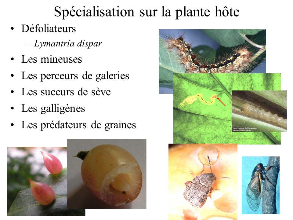 Spécialisation sur la plante hôte Défoliateurs –Lymantria dispar Les mineuses Les perceurs de galeries Les suceurs de sève Les galligènes Les prédateu