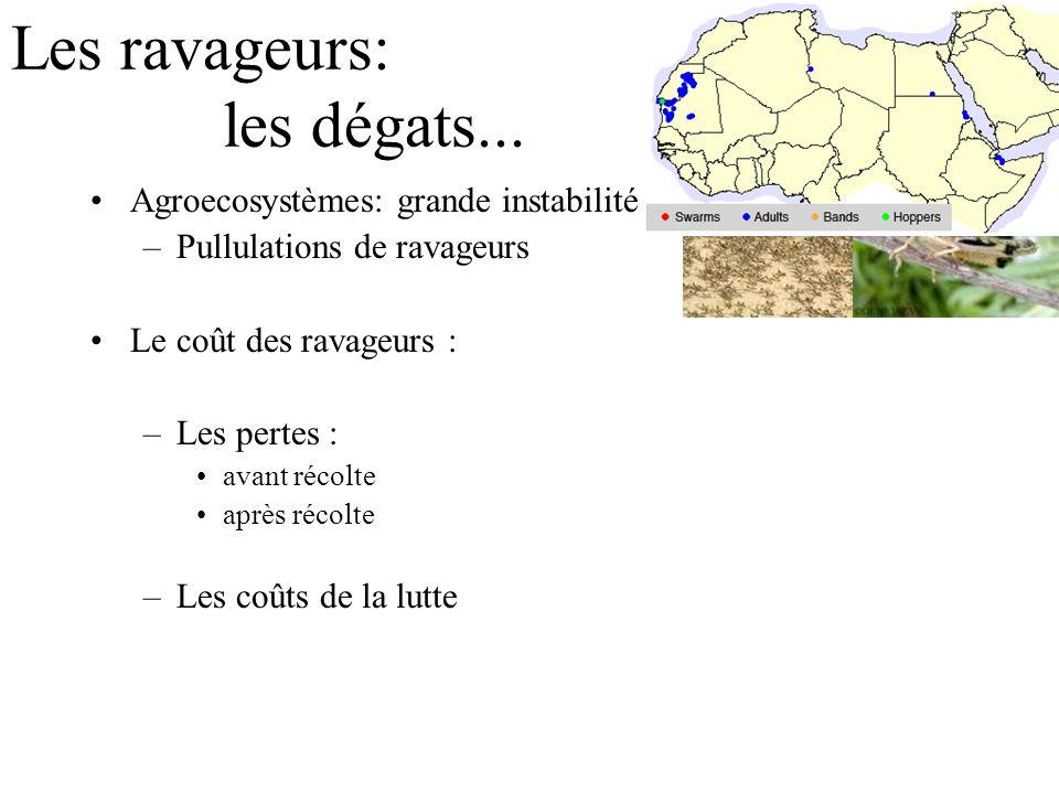 Les ravageurs: les dégats... Agroecosystèmes: grande instabilité –Pullulations de ravageurs Le coût des ravageurs : –Les pertes : avant récolte après