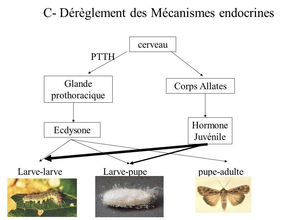 C- Dérèglement des Mécanismes endocrines cerveau PTTH Glande prothoracique Corps Allates Hormone Juvénile Ecdysone Larve-larveLarve-pupepupe-adulte