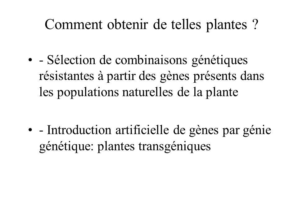 Comment obtenir de telles plantes ? - Sélection de combinaisons génétiques résistantes à partir des gènes présents dans les populations naturelles de