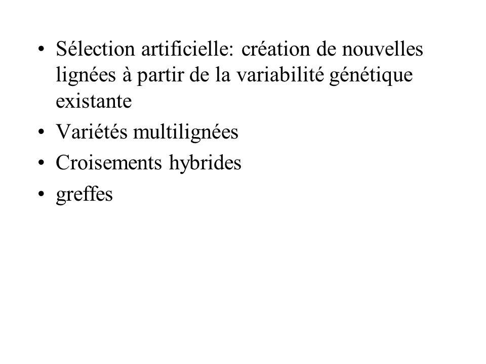 Sélection artificielle: création de nouvelles lignées à partir de la variabilité génétique existante Variétés multilignées Croisements hybrides greffe