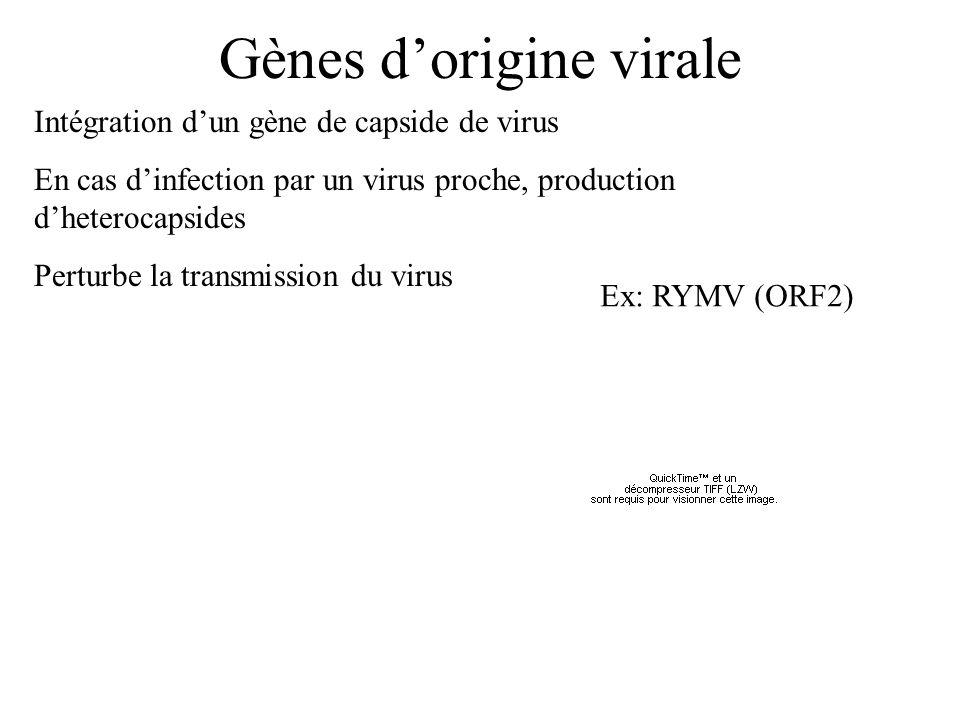Gènes dorigine virale Intégration dun gène de capside de virus En cas dinfection par un virus proche, production dheterocapsides Perturbe la transmiss