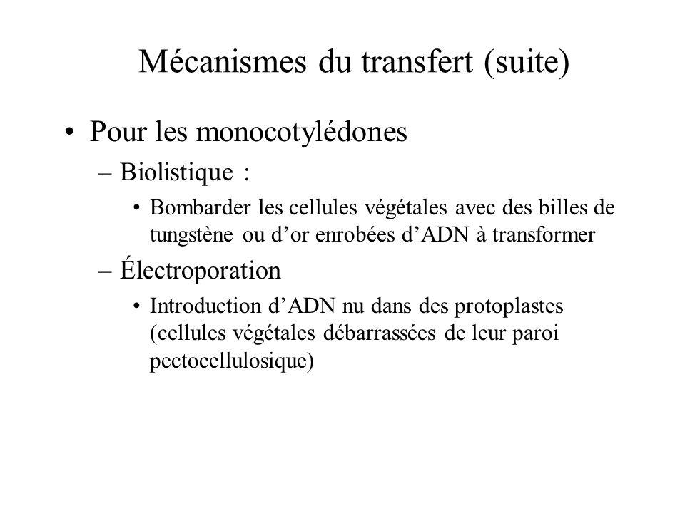 Mécanismes du transfert (suite) Pour les monocotylédones –Biolistique : Bombarder les cellules végétales avec des billes de tungstène ou dor enrobées