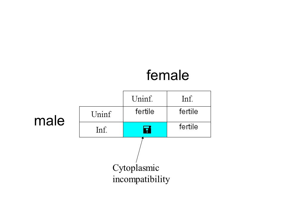 female male Inf. Cytoplasmic incompatibility Uninf. Uninf