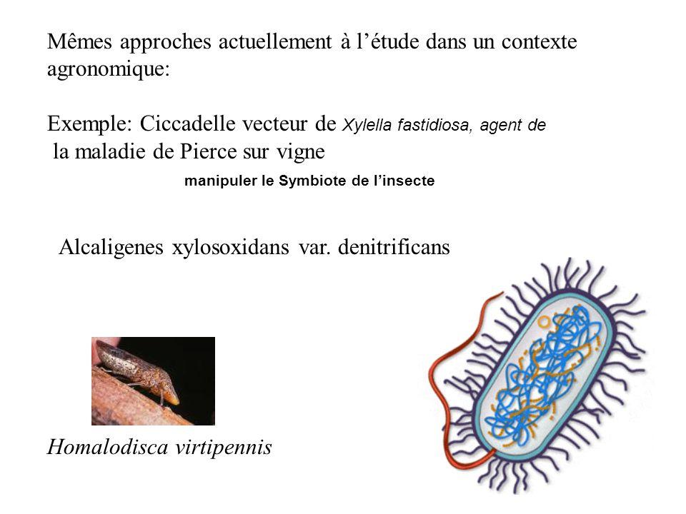 Mêmes approches actuellement à létude dans un contexte agronomique: Exemple: Ciccadelle vecteur de Xylella fastidiosa, agent de la maladie de Pierce s