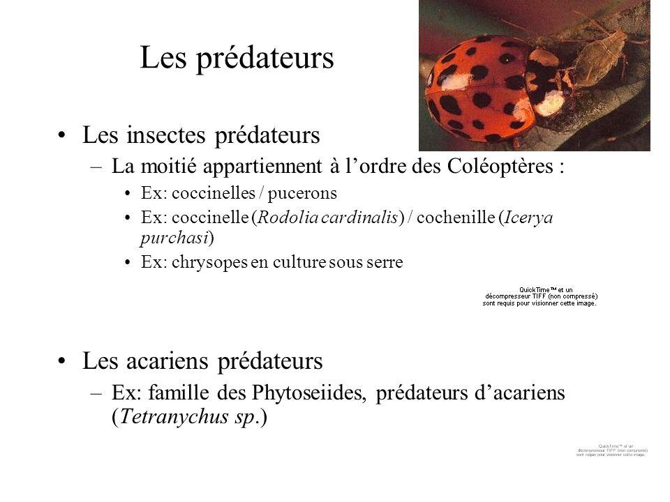 Les prédateurs Les insectes prédateurs –La moitié appartiennent à lordre des Coléoptères : Ex: coccinelles / pucerons Ex: coccinelle (Rodolia cardinal
