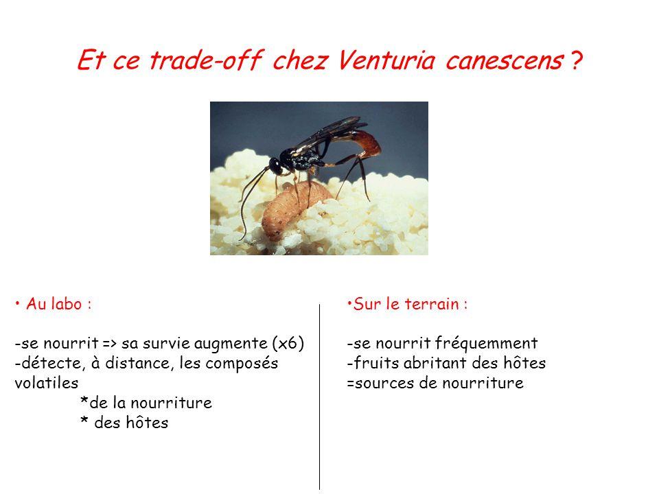 Et ce trade-off chez Venturia canescens ? Au labo : -se nourrit => sa survie augmente (x6) -détecte, à distance, les composés volatiles *de la nourrit