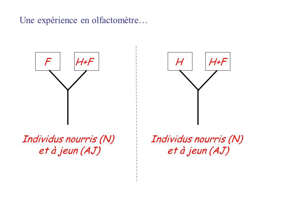 HH+FF Individus nourris (N) et à jeun (AJ) Individus nourris (N) et à jeun (AJ) Une expérience en olfactomètre…