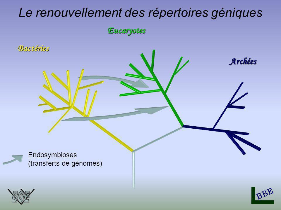 Bactéries Eucaryotes BBE Archées Endosymbioses (transferts de génomes) Le renouvellement des répertoires géniques