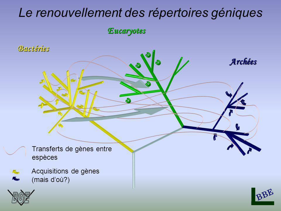 Bactéries Eucaryotes BBE Archées Transferts de gènes entre espèces Acquisitions de gènes (mais doù?) Le renouvellement des répertoires géniques