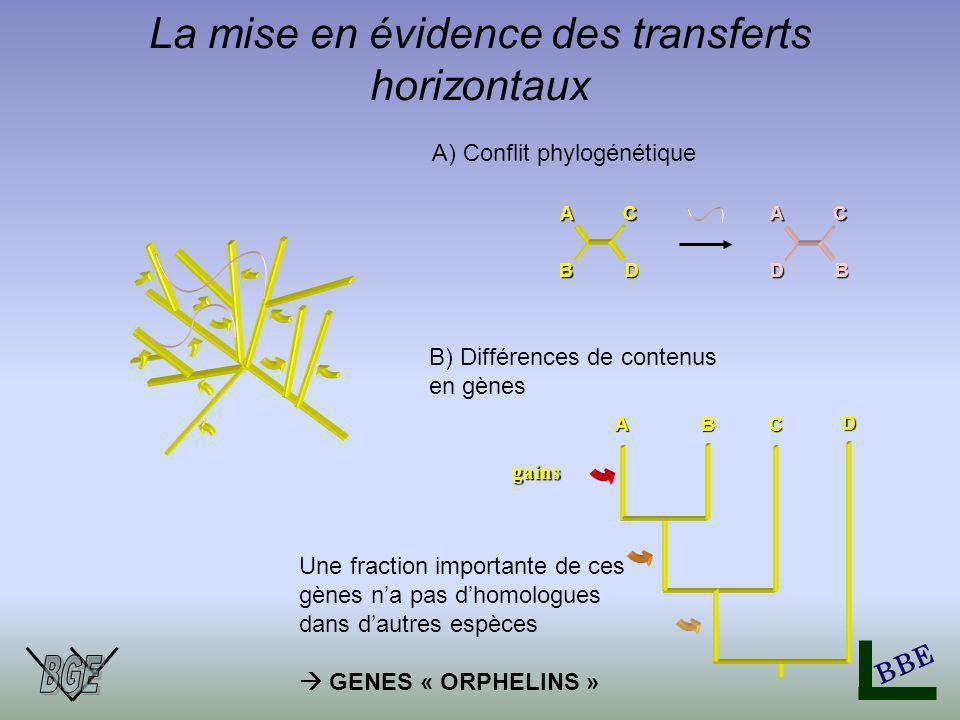 BBE La mise en évidence des transferts horizontaux A B C D A B C D A) Conflit phylogénétique ABC gains B) Différences de contenus en gènes D Une fraction importante de ces gènes na pas dhomologues dans dautres espèces GENES « ORPHELINS »