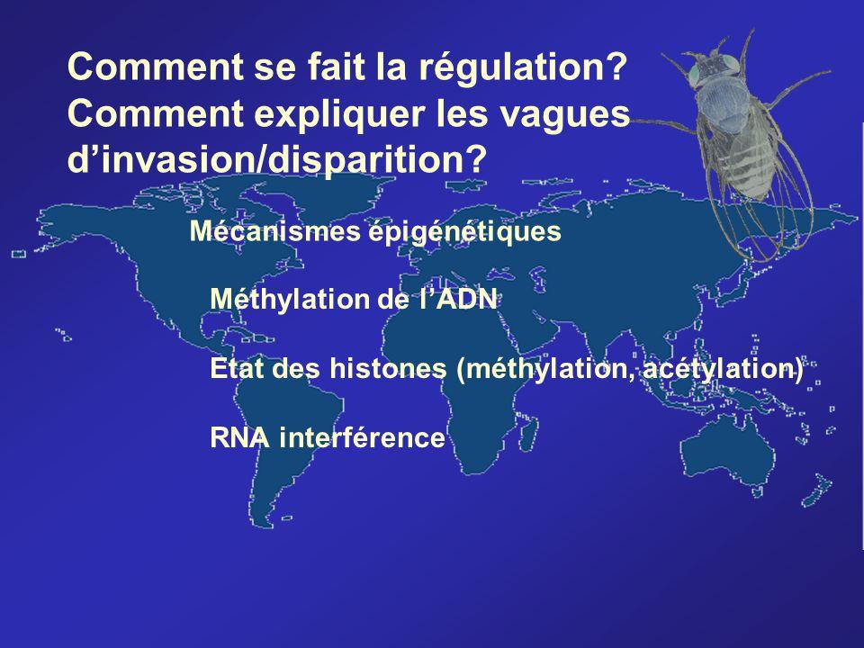 Comment se fait la régulation? Comment expliquer les vagues dinvasion/disparition? Mécanismes épigénétiques Méthylation de lADN Etat des histones (mét