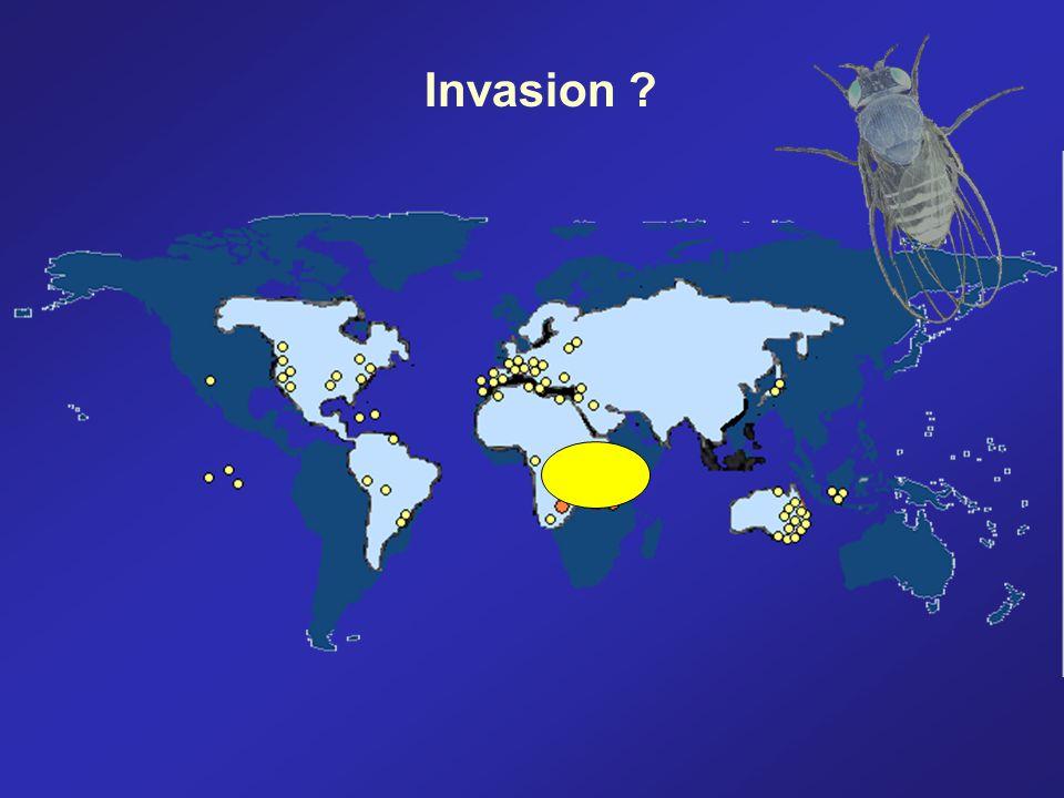 Invasion ?