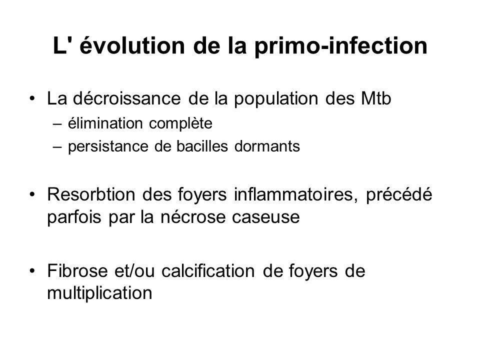 L évolution de la primo-infection La décroissance de la population des Mtb –élimination complète –persistance de bacilles dormants Resorbtion des foyers inflammatoires, précédé parfois par la nécrose caseuse Fibrose et/ou calcification de foyers de multiplication
