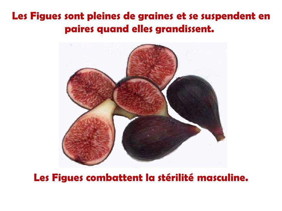 Il faut exactement neuf mois pour quun avocat arrive à maturité, depuis la floraison au murissement du fruit ; Il y a plus de 14 000 constituants phot