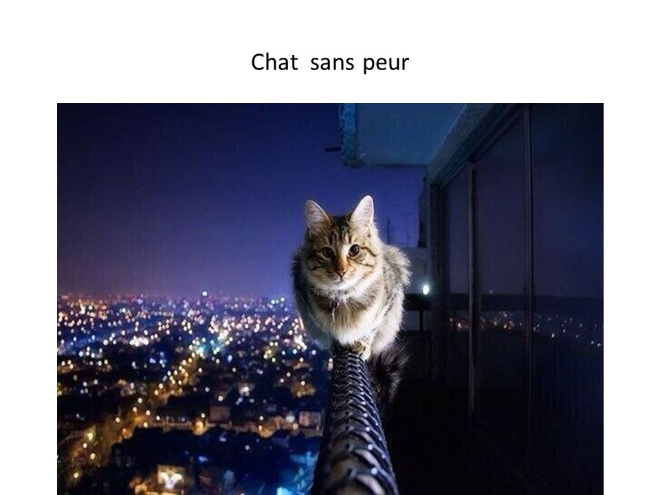 Chat sans peur
