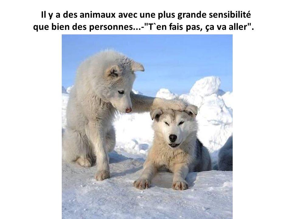 Il y a des animaux avec une plus grande sensibilité que bien des personnes...-