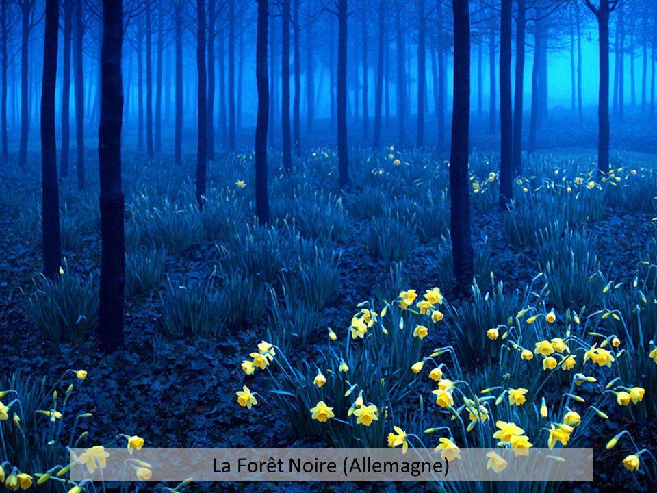 La Forêt Noire (Allemagne)