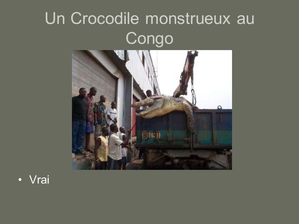 Un Crocodile monstrueux au Congo Vrai
