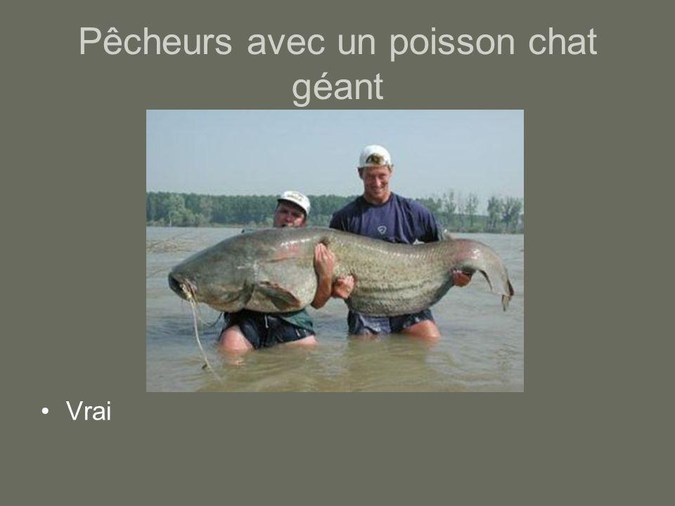 Pêcheurs avec un poisson chat géant Vrai