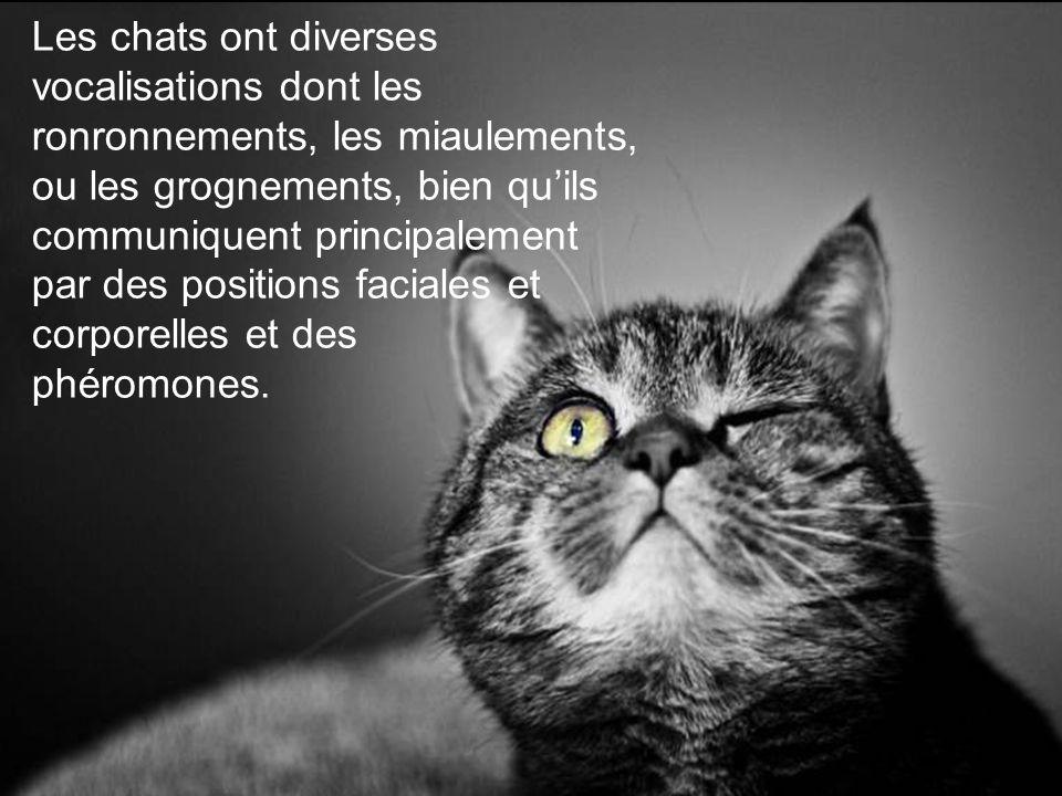 Les chats ont diverses vocalisations dont les ronronnements, les miaulements, ou les grognements, bien quils communiquent principalement par des positions faciales et corporelles et des phéromones.
