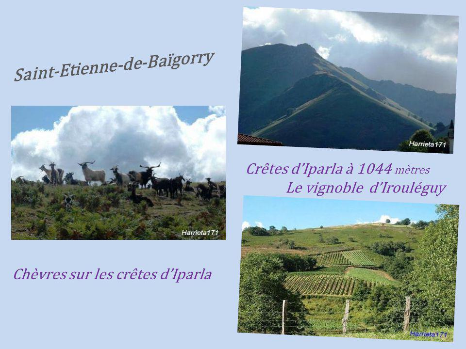 Panorama sur. le village Le vignoble Irouléguy