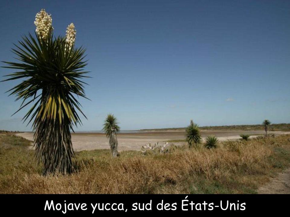 Lala palms tree, Afrique