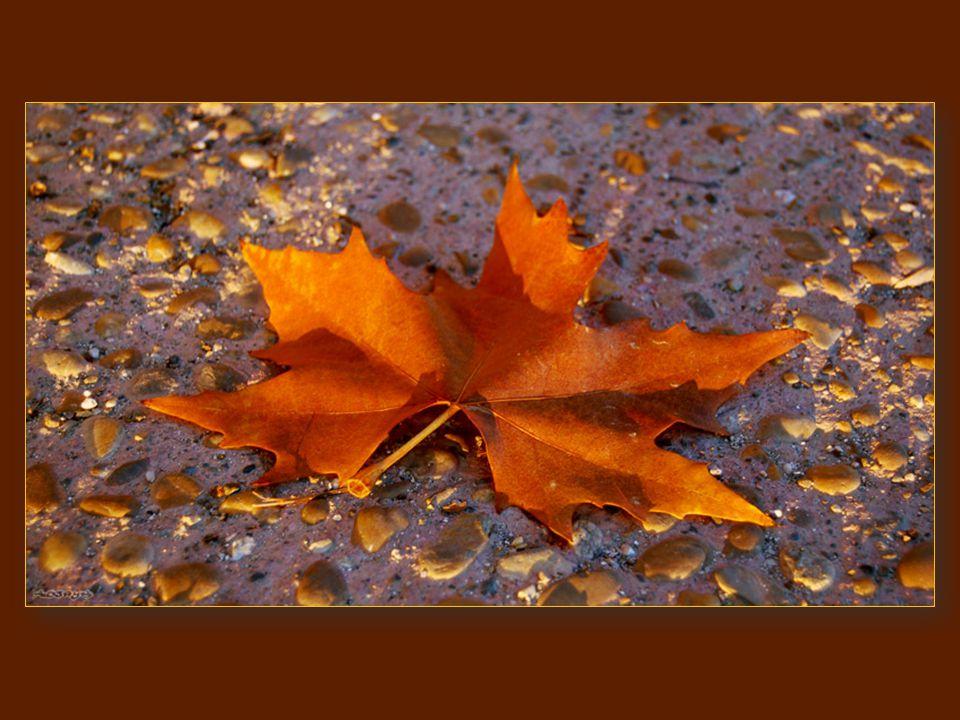 Les Feuilles Mortes (Autumn Leaves) Paroles (extraits du poème du même titre) de Jacques Prévert Musique par Joseph Kosma Chanteur : Andrea Bocelli