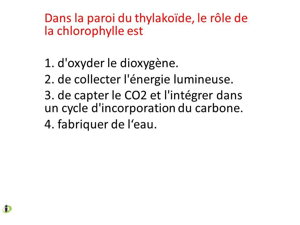 Dans la paroi du thylakoïde, le rôle de la chlorophylle est 1. d'oxyder le dioxygène. 2. de collecter l'énergie lumineuse. 3. de capter le CO2 et l'in