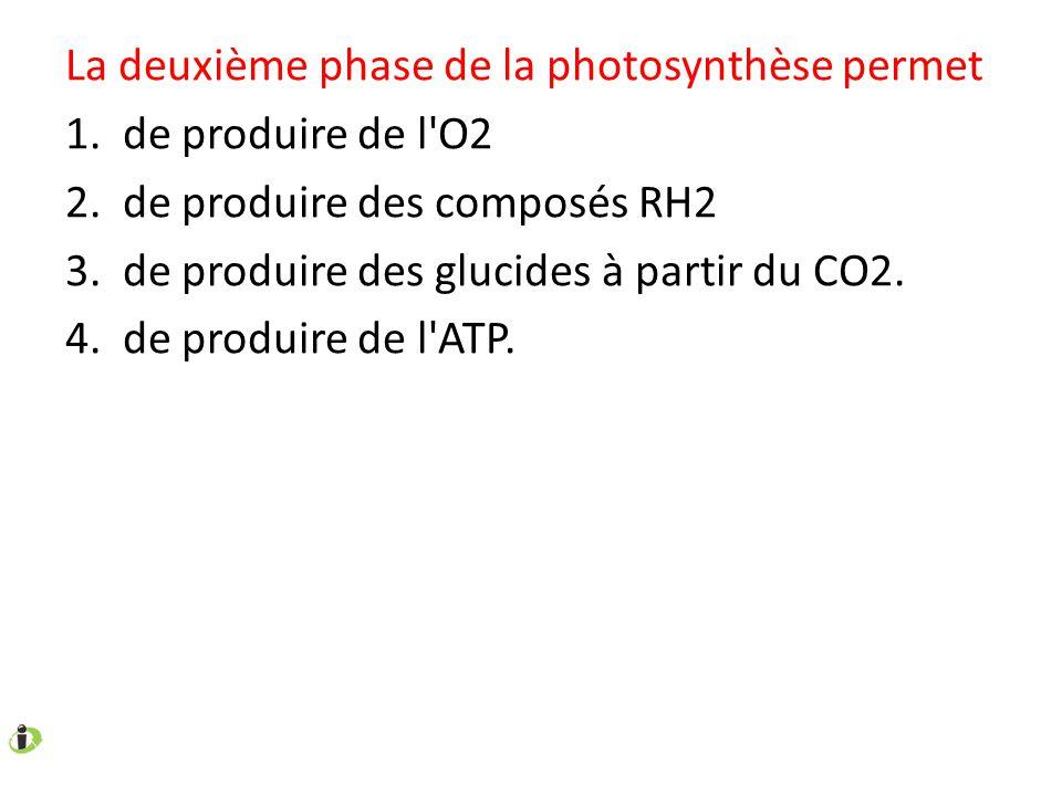 La deuxième phase de la photosynthèse permet 1. de produire de l'O2 2. de produire des composés RH2 3. de produire des glucides à partir du CO2. 4. de
