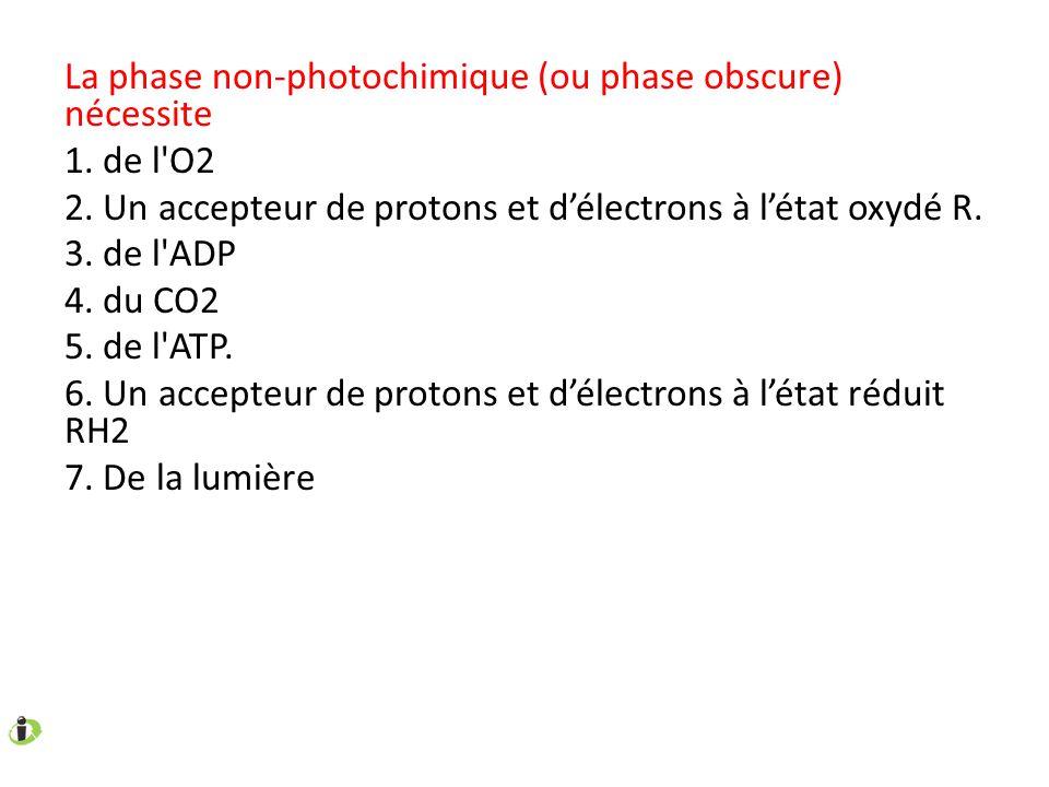La phase non-photochimique (ou phase obscure) nécessite 1. de l'O2 2. Un accepteur de protons et délectrons à létat oxydé R. 3. de l'ADP 4. du CO2 5.
