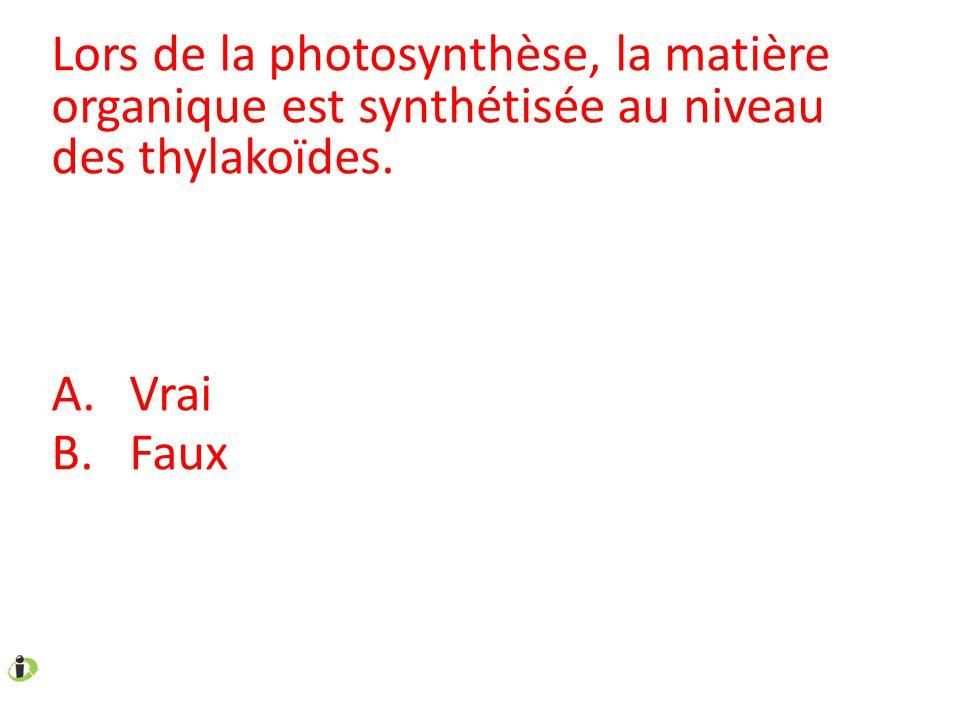 Lors de la photosynthèse, la matière organique est synthétisée au niveau des thylakoïdes. A.Vrai B.Faux