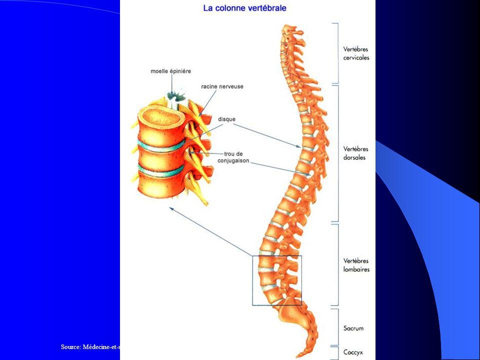 Le disque intervertébral Lannulus Nucléus ou noyau Un disque intervertébral est situé entre chaque vertèbre